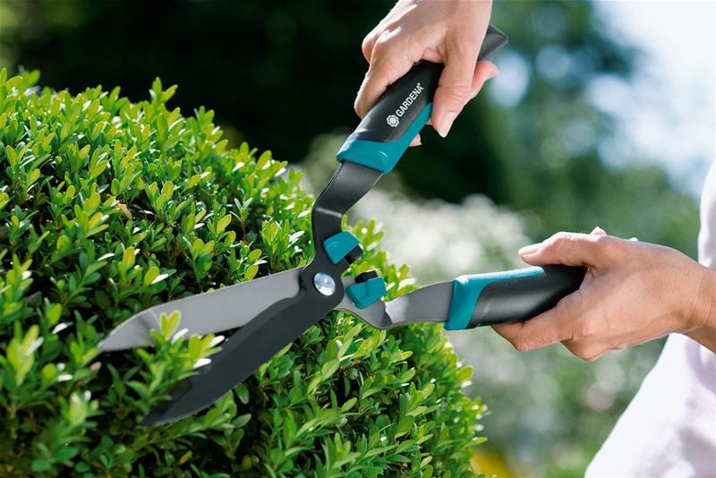 Обрезка и лечение деревьев