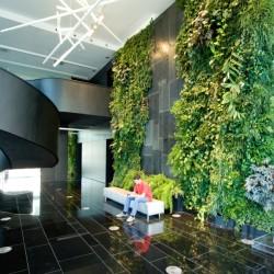 Озеленение офисов, квартир