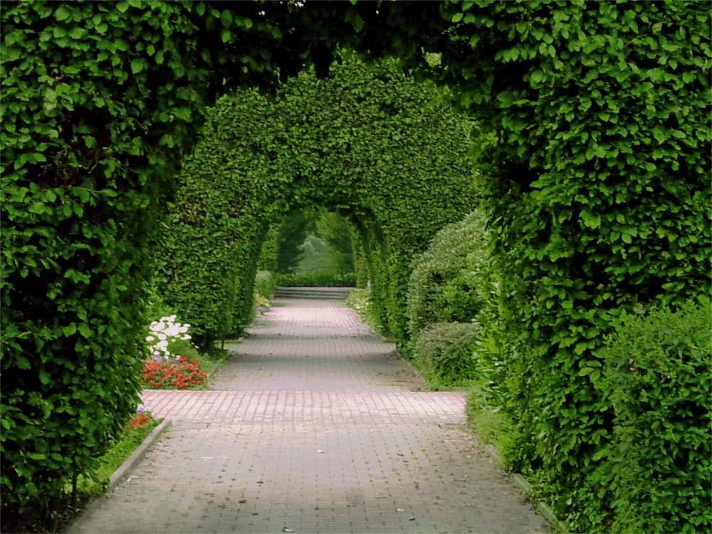 Озеленение и благоустройство в Ивантеевке