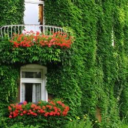 Озеленение и благоустройство территории в Краснозаводске