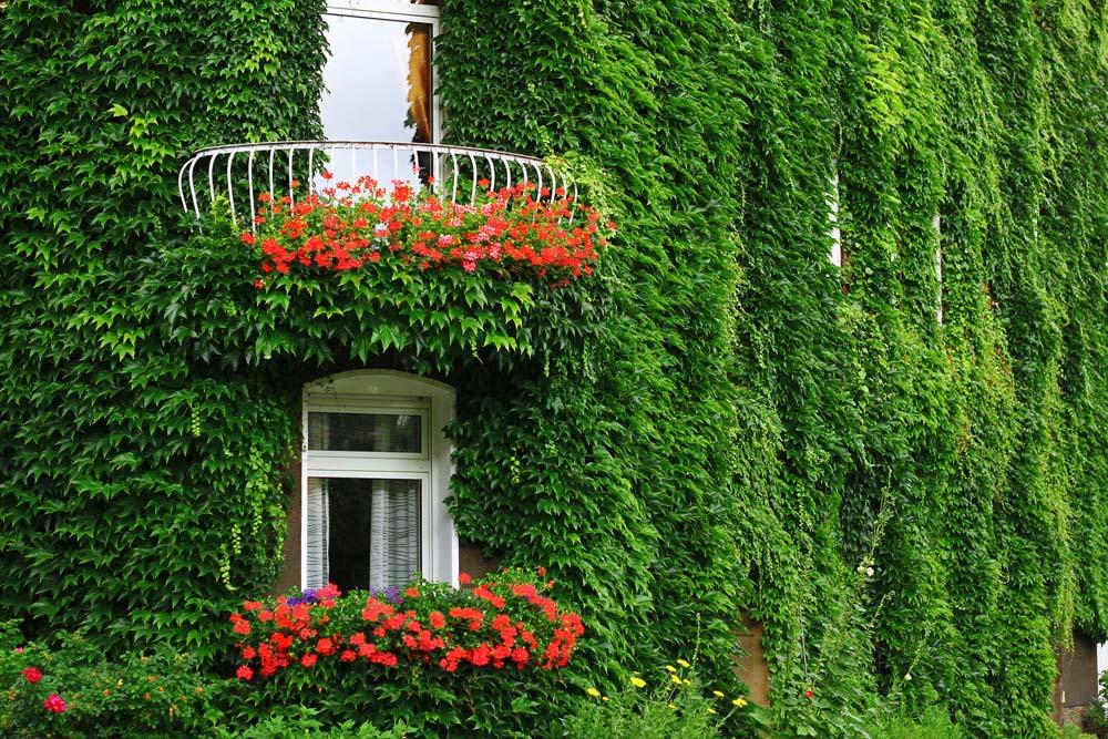 Озеленение и благоустройство сада в Краснозаводске